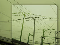 Lucinda Atwood | Birds on a Wire, digital photography