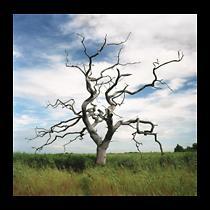 Marian Penner Bancroft, Oak rooted in saline reedbed, Snape Maltings, U.K., 2013