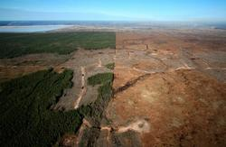 Before and after - Aerial view of chopped down Boreal forest near a tar sands mine north of Fort McMurray, Alberta, Canada. © Jiri Rezac / WWF-UK (image via Greenpeace and Open Culture)
